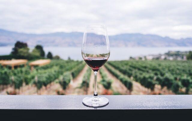 Rødvin og CBD olie – Er det fremtidens naturmedicin?